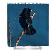 Red Winged Black Bird Shower Curtain