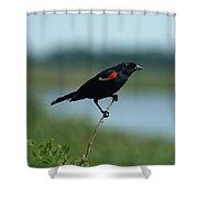 Red-winged Blackbird Landscape Shower Curtain