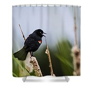 Red Winged Blackbird Singing Shower Curtain