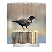 Red Winged Blackbird Shower Curtain