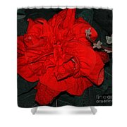 Red Winter Rose Shower Curtain