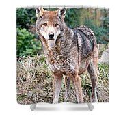 Red Wolf Alert Shower Curtain