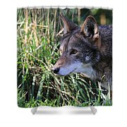 Red Wolf On The Hunt Shower Curtain