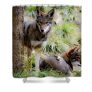 Red Wolves Shower Curtain