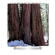 Red Wood Tree Shower Curtain