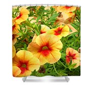 Red Yellow Morning Glories Shower Curtain