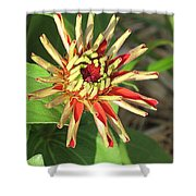 Red Zinnia- Early Bloom Shower Curtain