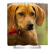 Redbone Coonhound - Man's Best Friend The Hound Dog Shower Curtain