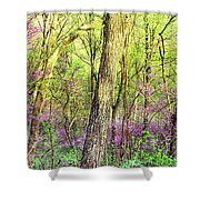 Redbud Cercis Canadensis Trees Shower Curtain