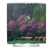 Redbud - Fm000095 Shower Curtain