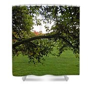 Redbud Tree In Autumn Shower Curtain