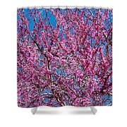 Redbud Tree With Dense Blossoms Shower Curtain