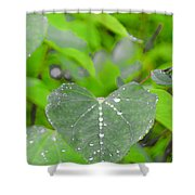 Redbud Water Droplets Shower Curtain