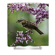 Redbud With Grosbeak Shower Curtain