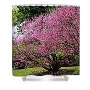 Redbuds In Action Shower Curtain