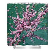 Redbuds Over San Antonio River Shower Curtain