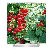 Redcurrant Berries Shower Curtain