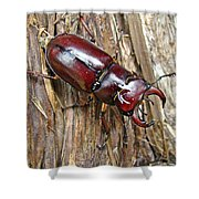 Reddish-brown Stag Beetle - Lucanus Capreolus Shower Curtain