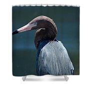 Reddish Egret 3 Shower Curtain