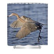 Reddish Egret Dance Fishing Shower Curtain