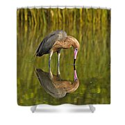 Reddish Egret Reflection Shower Curtain