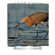 Reddish Egret Strike Shower Curtain