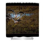 Reddish Egrets Shower Curtain