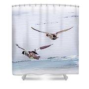 Redhead And  Merganser Ducks Shower Curtain
