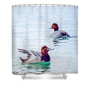 Redhead Ducks Shower Curtain