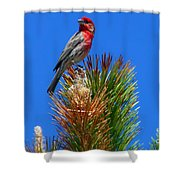 Redheaded Tree Topper Shower Curtain