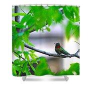 Redneck Humming Bird Shower Curtain