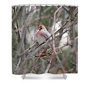 Redpoll And Pine Siskin Shower Curtain
