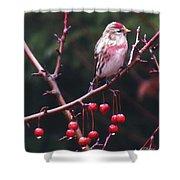 Redpoll On Crabapple Tree Shower Curtain