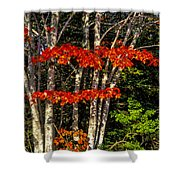 Reds And Greens Shower Curtain