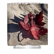 Reds And Purples - Deep Red Maple Leaf And Its Shadow Shower Curtain