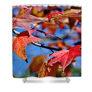 Reds Of Autumn Shower Curtain