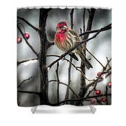 Reds Of Winter Shower Curtain