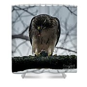 Redtail Hawk And Mouse Shower Curtain