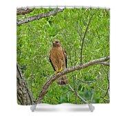 Red-shouldered Hawk Shower Curtain