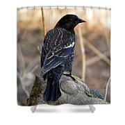Redwing Blackbird Shower Curtain