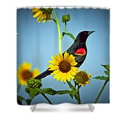 Redwing In Sunflowers Shower Curtain