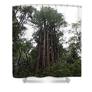 Redwood Fairy Ring Far Shower Curtain