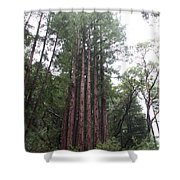 Redwood Fairy Ring Shower Curtain
