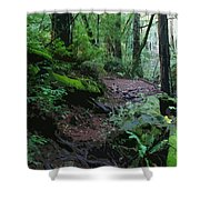 Redwood Forest Scene 1 Shower Curtain