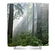 Redwood Forest With Sunbeams Shower Curtain