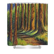 Jedediah Smith Redwoods State Park Shower Curtain