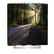 Redwood Magic Shower Curtain