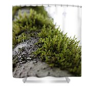 Redwood Branches Shower Curtain