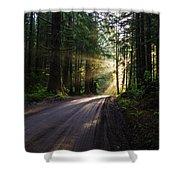 Redwood National Park Morning Shower Curtain