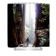 Redwood Path Shower Curtain